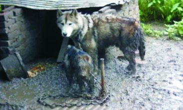 Hungige Hunde in Not